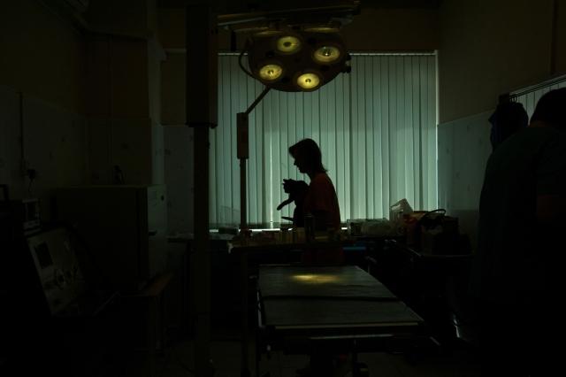 Ветеринарный врач несет кошку на операционный стол