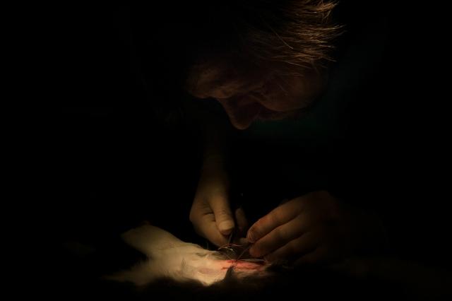 Хирург накладывает шов, операция близка к завершению