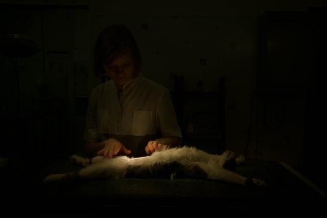 Кошка на операционном столе. Все готово к началу операции
