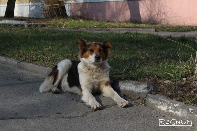 Брянских чиновников заставили заботиться о собаках