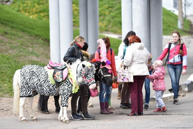 Мэр Ярославля: «У входа в главный храм города опорожняются лошади!»