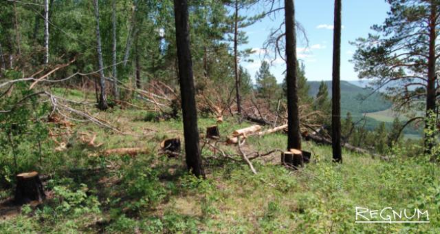 Лес Прибайкалья