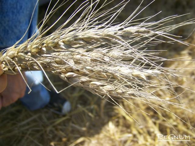 Приангарье делает ставку на зернопереработку, индейку, грибы и экспорт