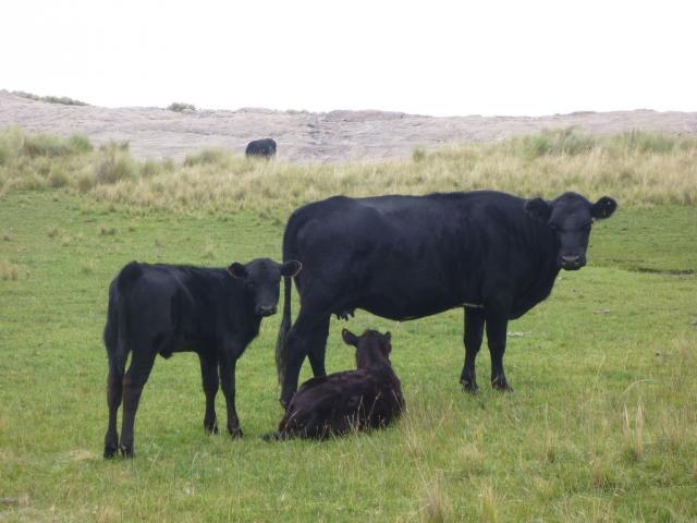 Россельхознадзор обеспокоен выявлением антибиотиков в аргентинском мясе