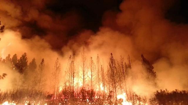 Лесной пожар на юго-востоке Китая наконец-то удалось ликвидировать