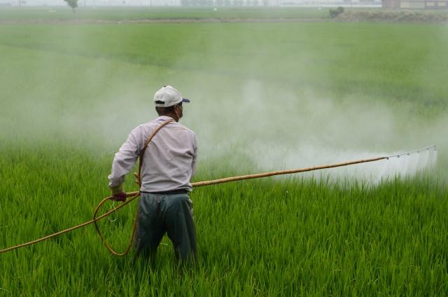 Китайские ученые создали базу данных по пестицидам на овощах и фруктах