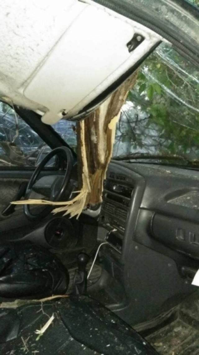 Дерево пробило лобовое стекло