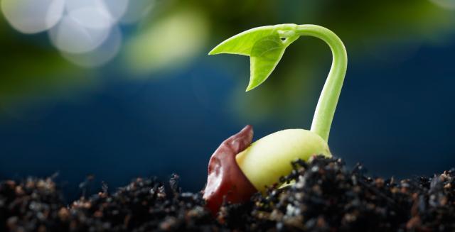 Прорастающее семя