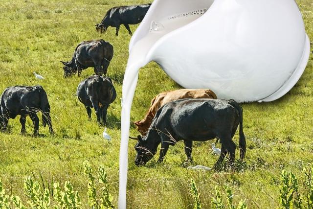 Белоруссия увеличит поставки молока в Россию