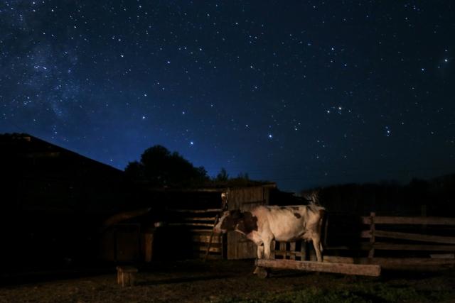 Летом скот ночует во дворе. Аул Каскат, Омская область