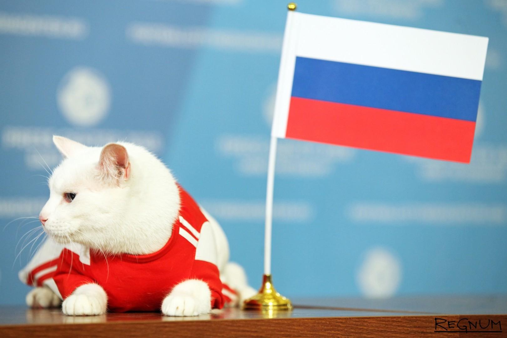 Кот-предсказатель выбрал сборную России