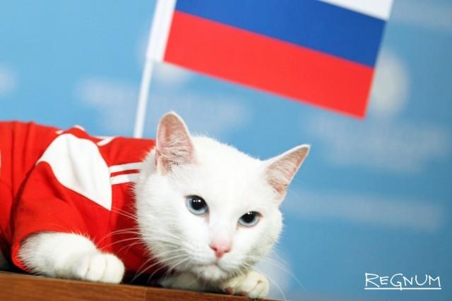 Эрмитажный кот Ахилл предсказал победу России в первом матче ЧМ-2018