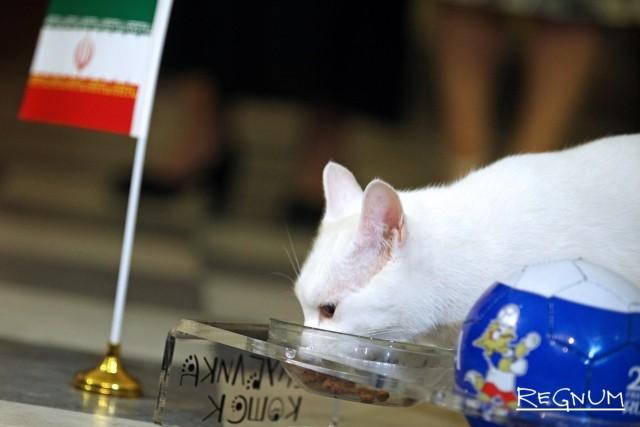 Выбор эрмитажного кота — Иран