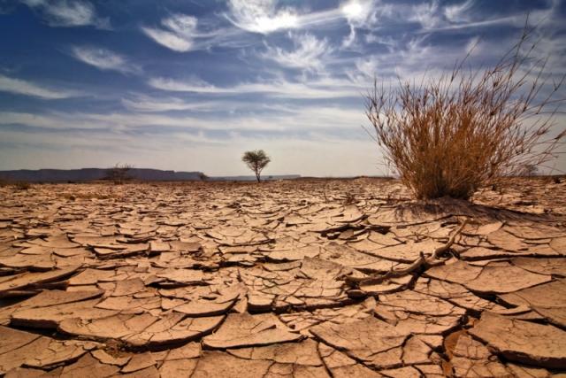 От потопов к экстремальной засухе – в Литве гибнет урожай