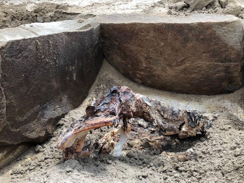 Находка петербургских археологов в Сибири