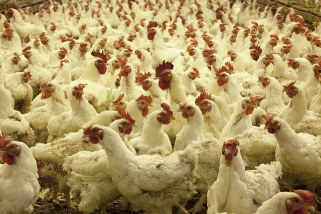 птичий грипп 2019