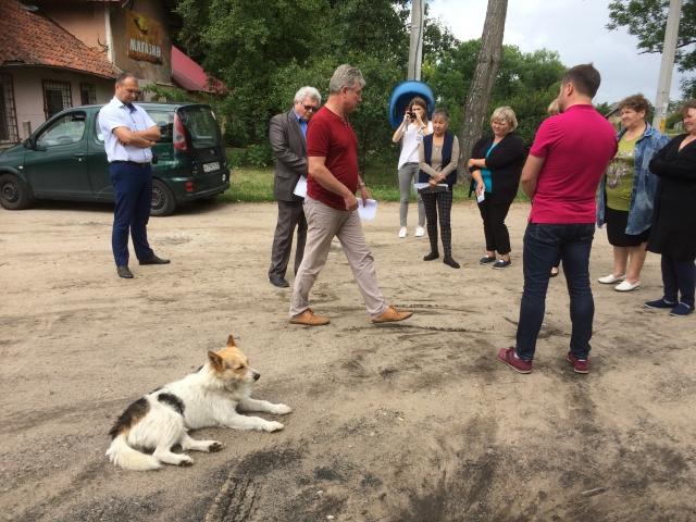 В Калининградской области «генералы песчаных карьеров плюют на все законы»
