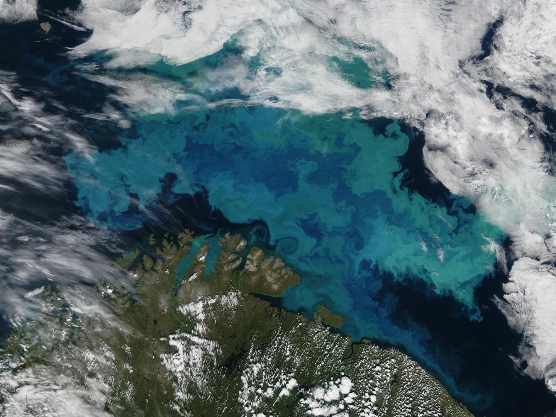 Карское море фото со спутника