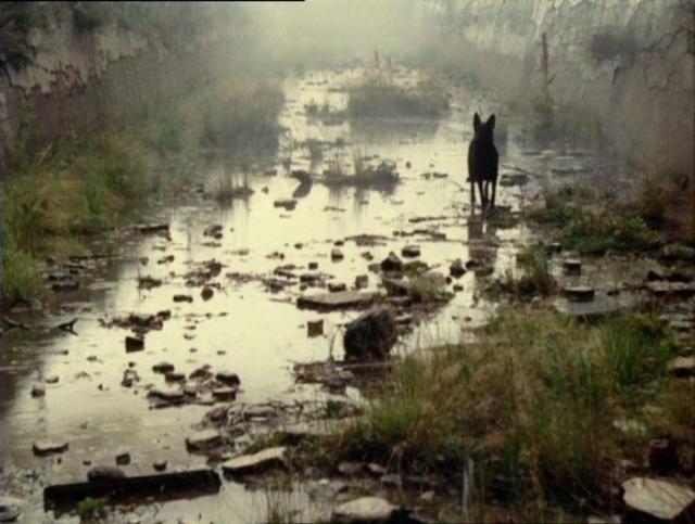 На Украине планируют снять запрет на деятельность в Чернобыльской зоне