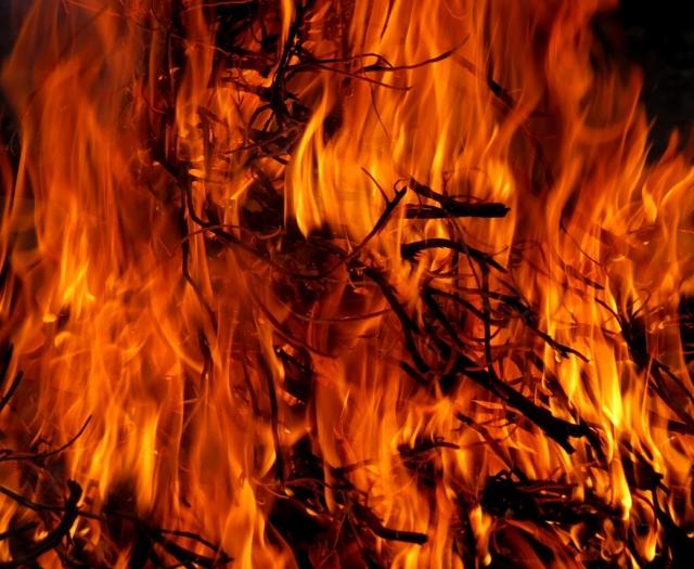 Площадь лесных пожаров в России сравнима с 14 миллионами футбольных полей