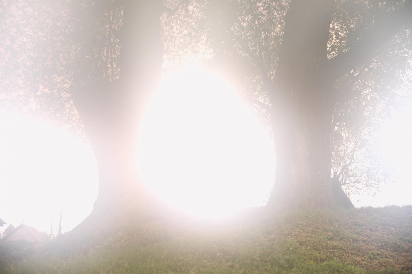 В Чувашии много больших деревьев, особенно ив