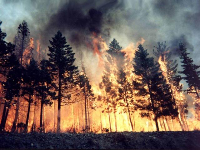 Площадь пожаров, уничтожающих красноярские леса, превышает 250 тыс. га