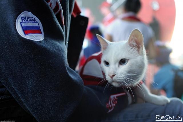 Эрмитажный кот Ахилл нагадал победу Бельгии в матче с французами