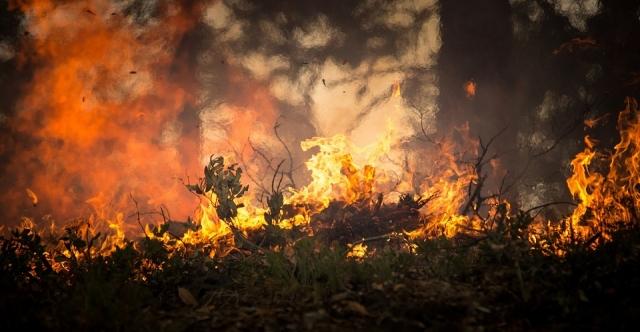 "Картинки по запросу ""лес пожар"""