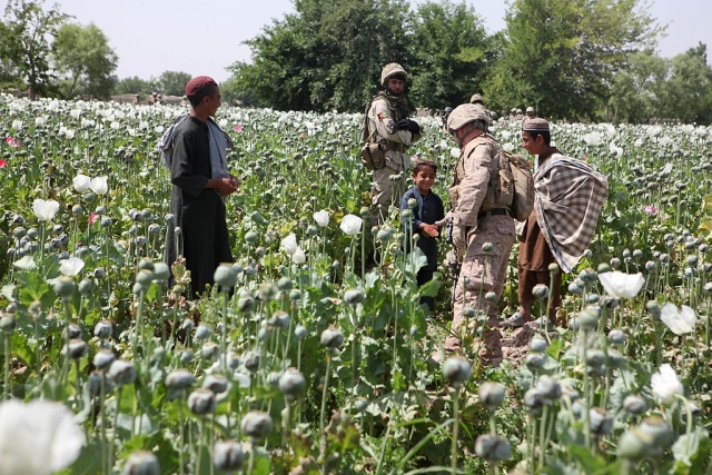 На плантации опийного мака. Афганистан