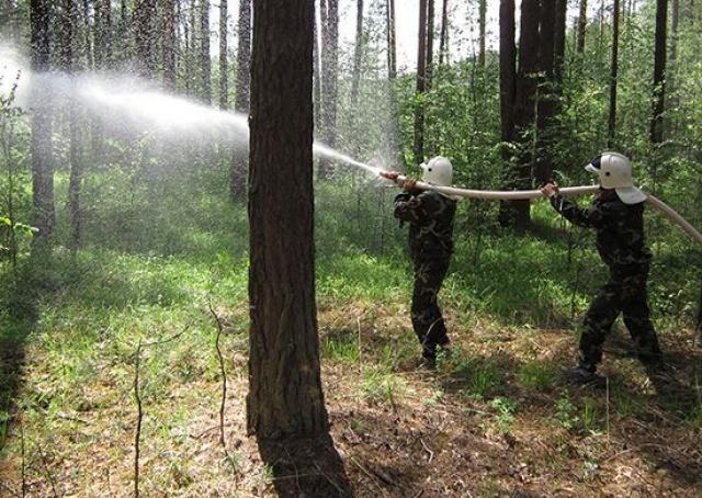 В России за сутки огонь уничтожил 69,5 тыс. га лесов
