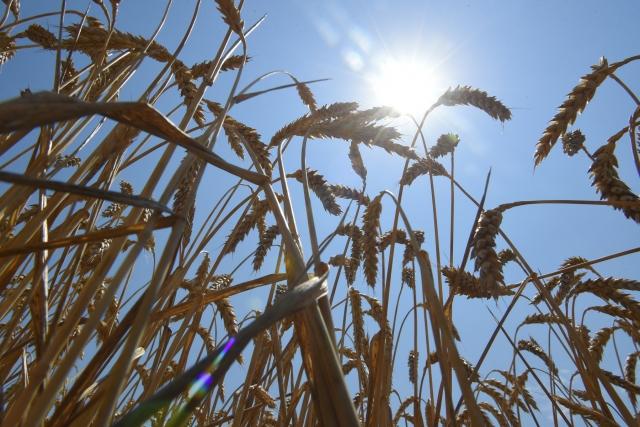 В Адыгее из-за засухи введен режим ЧС