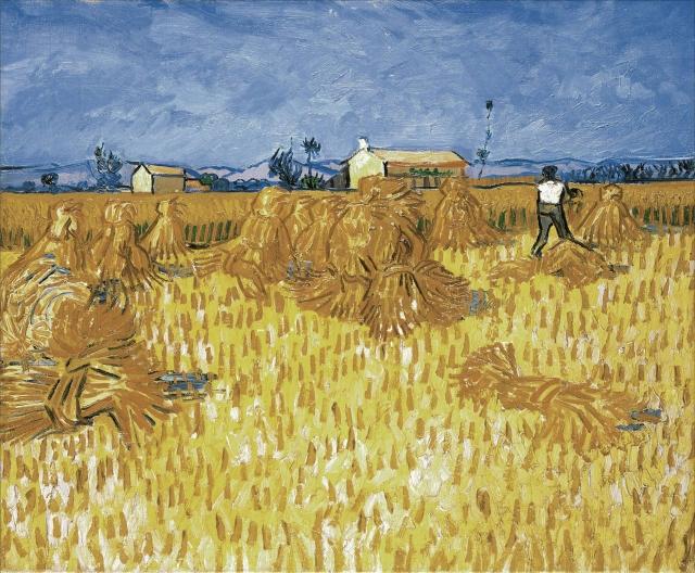 Сбор урожая: в Оренбуржье решается вопрос о введении режима ЧС
