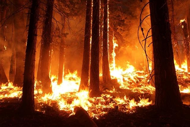 На Ямале за два дня площадь лесных пожаров увеличилась в 20 раз