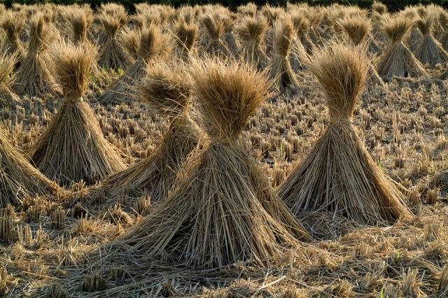 Чувашия отдаст зерно на хранение до нового года за 5,4 млн рублей
