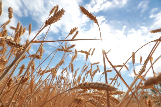 Ростовские хлеборобы планируют собрать 10 млн тонн зерна