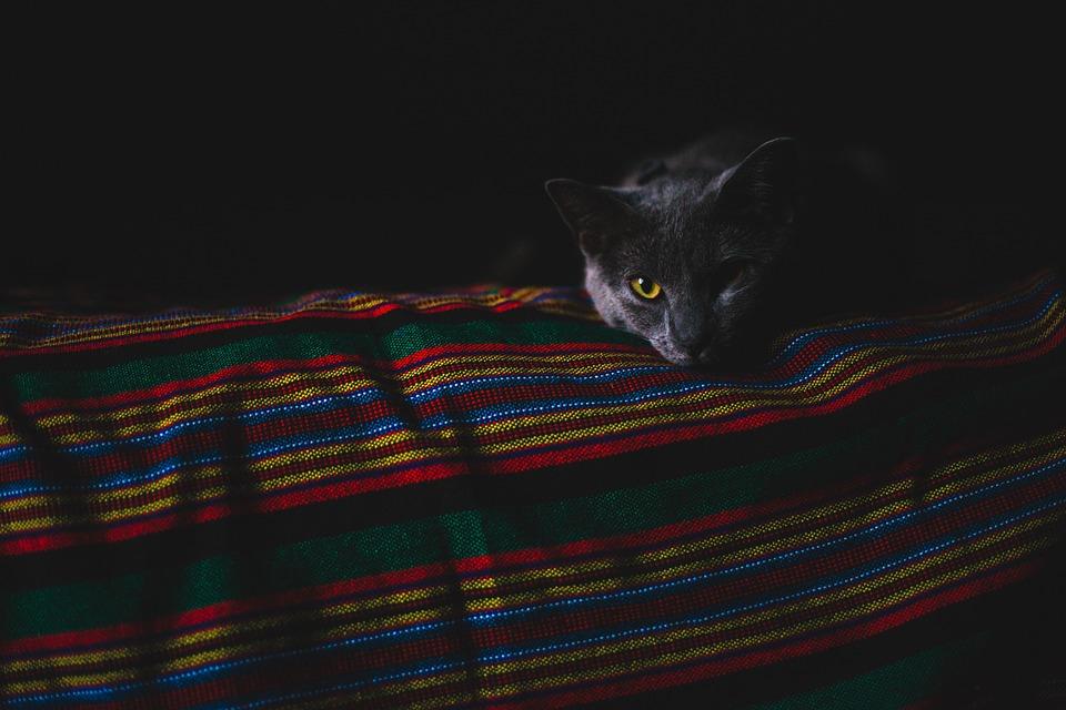 Чёрная кошка в тёмной комнате