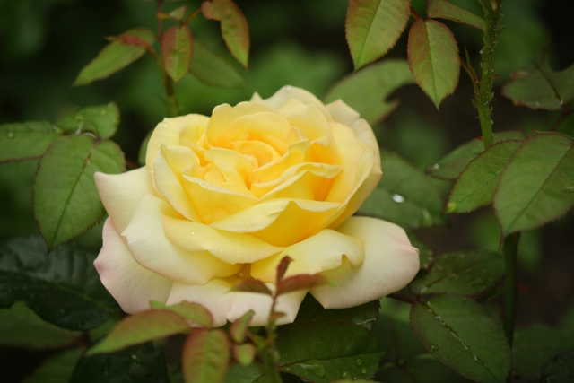 «Дарите женщинам цветы, не срывая» : под Тюменью появился заповедник