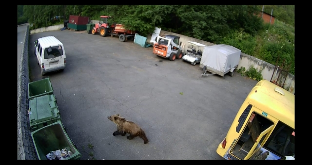 В Красноярском крае заповедник открыли после нашествия медведей