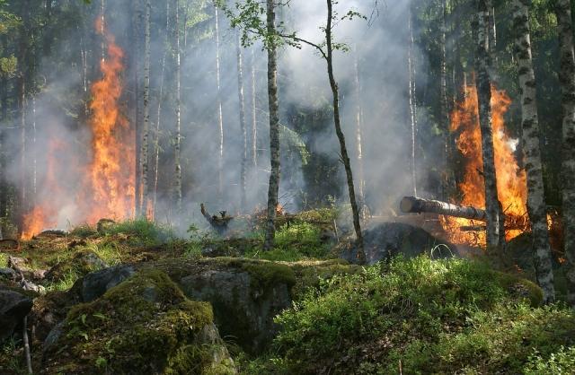 Власти Бурятии отчитались о стабильной лесопожарной обстановке