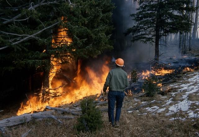 В Красноярском крае потушили 10 лесных пожаров, действуют – 146