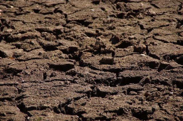 Засуха в Крыму погубила 23 тысячи гектаров ранних зерновых