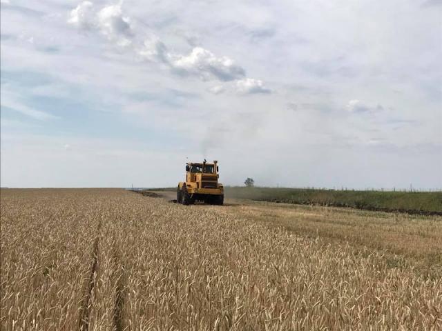Зерновые в Ульяновской области убраны с четверти площадей