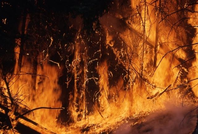 Десятки лесных пожаров продолжают уничтожать красноярские леса