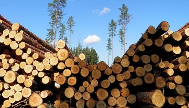 На Украине втрое сократился объем экспорта топливной древесины