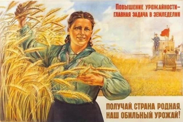 Липецкие аграрии собрали 70% урожая зерновых