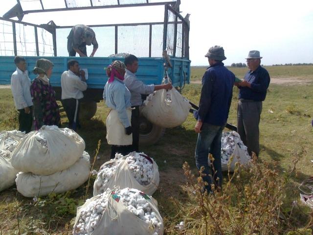 Сингапурская компания выделит $340 млн на переработку хлопка в Узбекистане