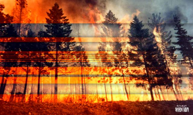 В заповедном лесу под Ялтой произошел пожар