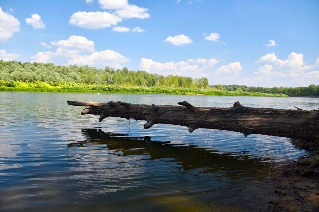 В Оренбуржье нашли «дерево из мамонтовой эпохи»