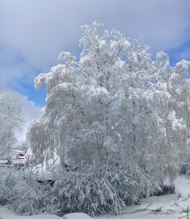 МЧС предупредило жителей Томской области о предстоящих заморозках