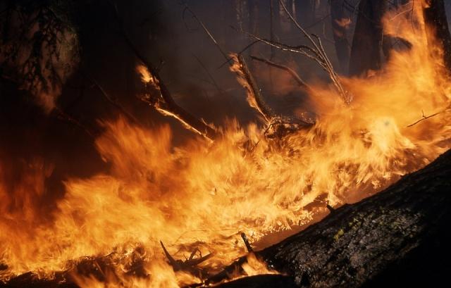 В Красноярском крае площадь лесных пожаров превышает 70 тыс. га
